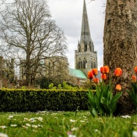 Tulips with Chichester Cathedral