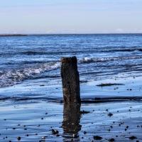 Seashorepics